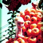 petit-frutti-1_2378783818_o