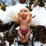 snow-on-dead-plant_2331137736_o